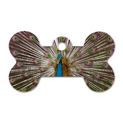 Indian Peacock Plumage Dog Tag Bone (one Side) by Simbadda