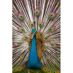 Indian Peacock Plumage 5 5  X 8 5  Notebooks by Simbadda