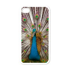 Indian Peacock Plumage Apple Iphone 4 Case (white) by Simbadda