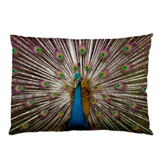 Indian Peacock Plumage Pillow Case (two Sides) by Simbadda