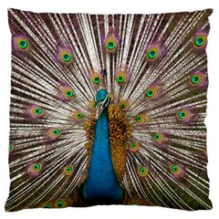 Indian Peacock Plumage Large Flano Cushion Case (one Side) by Simbadda