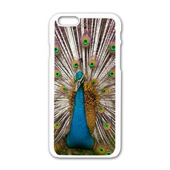 Indian Peacock Plumage Apple Iphone 6/6s White Enamel Case by Simbadda