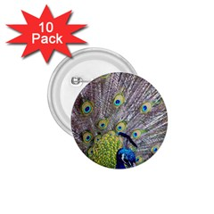 Peacock Bird Feathers 1 75  Buttons (10 Pack) by Simbadda