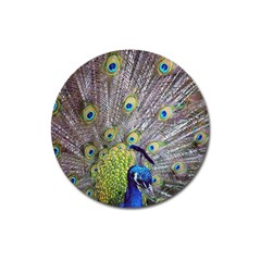 Peacock Bird Feathers Magnet 3  (round) by Simbadda