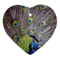 Peacock Bird Feathers Heart Ornament (two Sides) by Simbadda