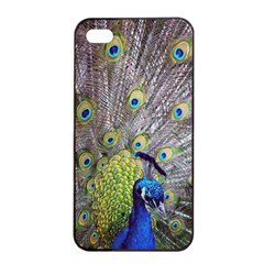 Peacock Bird Feathers Apple Iphone 4/4s Seamless Case (black) by Simbadda