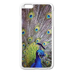 Peacock Bird Feathers Apple Iphone 6 Plus/6s Plus Enamel White Case by Simbadda