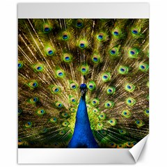 Peacock Bird Canvas 16  X 20   by Simbadda