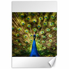 Peacock Bird Canvas 20  X 30   by Simbadda
