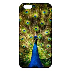 Peacock Bird Iphone 6 Plus/6s Plus Tpu Case by Simbadda