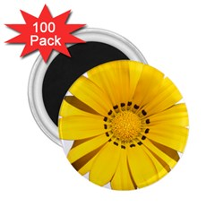 Transparent Flower Summer Yellow 2 25  Magnets (100 Pack)  by Simbadda