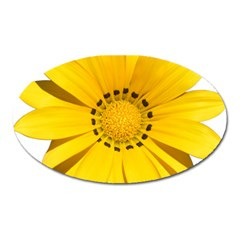 Transparent Flower Summer Yellow Oval Magnet by Simbadda