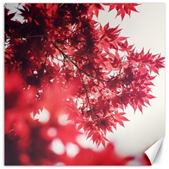 Maple Leaves Red Autumn Fall Canvas 20  X 20   by Onesevenart