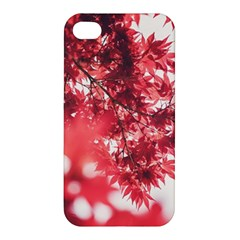 Maple Leaves Red Autumn Fall Apple Iphone 4/4s Premium Hardshell Case by Onesevenart
