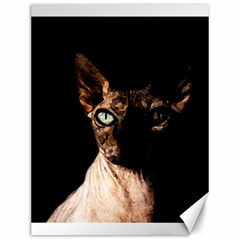 Sphynx Cat Canvas 12  X 16   by Valentinaart