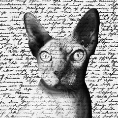 Sphynx Cat Magic Photo Cubes by Valentinaart