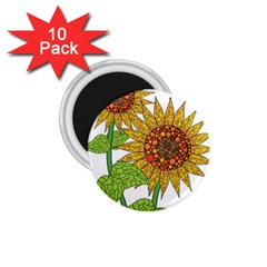 Sunflowers Flower Bloom Nature 1 75  Magnets (10 Pack)