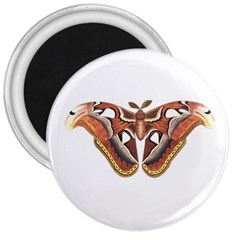 Butterfly Animal Insect Isolated 3  Magnets by Simbadda