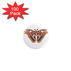 Butterfly Animal Insect Isolated 1  Mini Magnets (100 Pack)  by Simbadda
