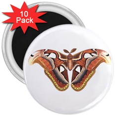 Butterfly Animal Insect Isolated 3  Magnets (10 Pack)  by Simbadda