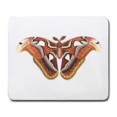 Butterfly Animal Insect Isolated Large Mousepads by Simbadda