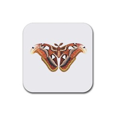 Butterfly Animal Insect Isolated Rubber Coaster (square)  by Simbadda