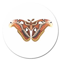 Butterfly Animal Insect Isolated Magnet 5  (round) by Simbadda