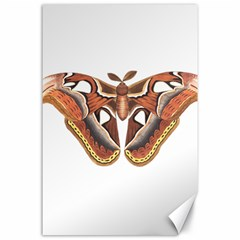 Butterfly Animal Insect Isolated Canvas 24  X 36  by Simbadda