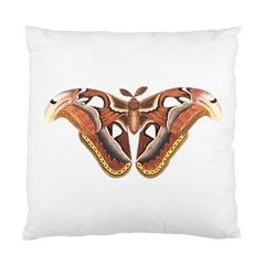 Butterfly Animal Insect Isolated Standard Cushion Case (two Sides) by Simbadda