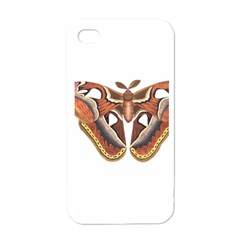 Butterfly Animal Insect Isolated Apple Iphone 4 Case (white) by Simbadda