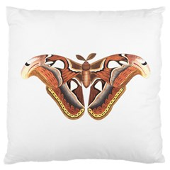 Butterfly Animal Insect Isolated Standard Flano Cushion Case (one Side) by Simbadda