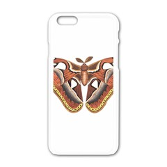 Butterfly Animal Insect Isolated Apple Iphone 6/6s White Enamel Case by Simbadda