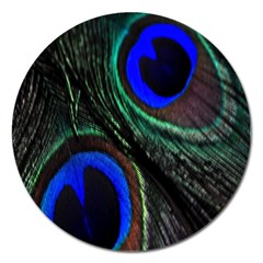 Peacock Feather Magnet 5  (round) by Simbadda