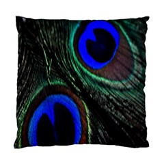 Peacock Feather Standard Cushion Case (two Sides) by Simbadda