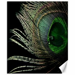 Feather Peacock Drops Green Canvas 8  X 10  by Simbadda