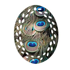 Colorful Peacock Feathers Background Oval Filigree Ornament (two Sides) by Simbadda