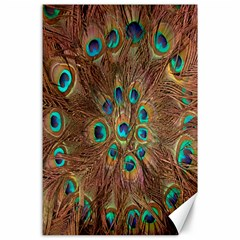Peacock Pattern Background Canvas 24  X 36  by Simbadda