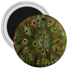 Peacock Feathers Green Background 3  Magnets by Simbadda