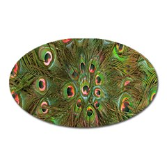 Peacock Feathers Green Background Oval Magnet by Simbadda