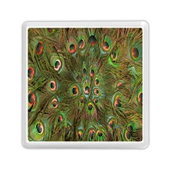 Peacock Feathers Green Background Memory Card Reader (square)  by Simbadda