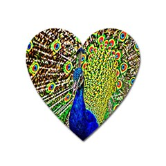 Graphic Painting Of A Peacock Heart Magnet by Simbadda