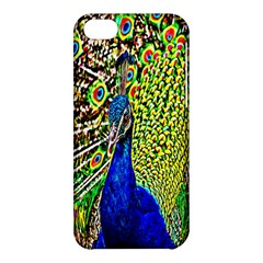 Graphic Painting Of A Peacock Apple Iphone 5c Hardshell Case
