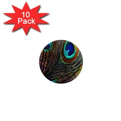 Peacock Feathers 1  Mini Magnet (10 Pack)  by Simbadda
