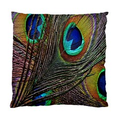 Peacock Feathers Standard Cushion Case (two Sides) by Simbadda