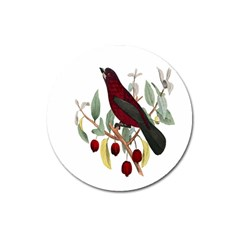 Bird On Branch Illustration Magnet 3  (round) by Amaryn4rt