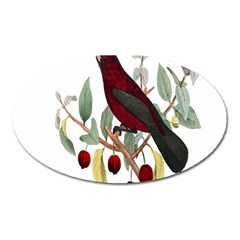 Bird On Branch Illustration Oval Magnet by Amaryn4rt