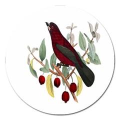 Bird On Branch Illustration Magnet 5  (round) by Amaryn4rt