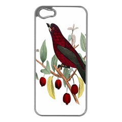 Bird On Branch Illustration Apple Iphone 5 Case (silver) by Amaryn4rt