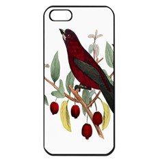 Bird On Branch Illustration Apple Iphone 5 Seamless Case (black) by Amaryn4rt