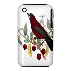 Bird On Branch Illustration Iphone 3s/3gs by Amaryn4rt